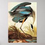 Poster de Audubon del vintage Póster