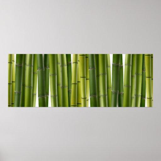 Poster de bambú de la arboleda
