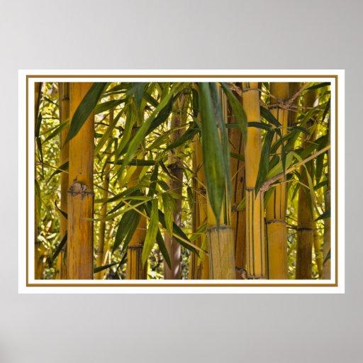 Poster de bambú de la selva