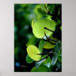 Poster de Bush del árbol de las hojas de la uva