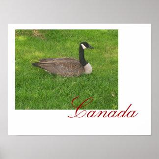 Poster de Canadá del ganso de Canadá