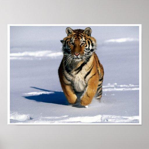 Poster de carga de la impresión del arte del tigre