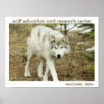 Poster de centro del lobo
