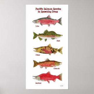 Poster de color salmón pacífico del arte de la esp