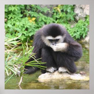 Poster de consumición del mono