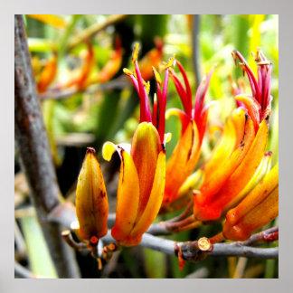 Poster de florecer el lino de Nueva Zelanda
