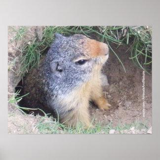 Poster de Groundhog
