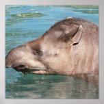 Poster de impregnación del Tapir