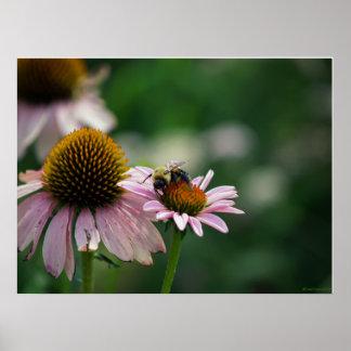 Poster de la abeja ocupada