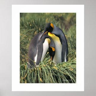 Poster de la abrazo del pingüino