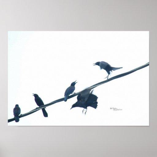 Poster de la acrobacia de los pájaros del cuervo