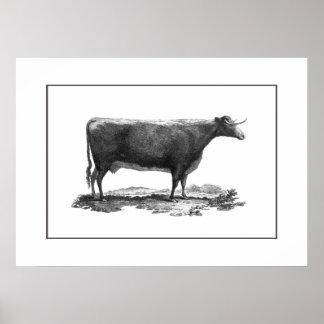Poster de la aguafuerte de la vaca del vintage con póster