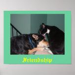 poster de la amistad del gato y del perro