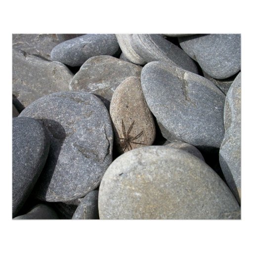 Poster de la araña de la roca