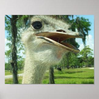 Poster de la avestruz