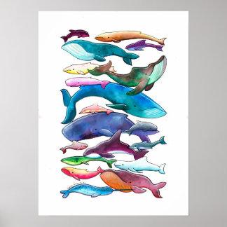 Poster de la ballena del delfín y de la masopa