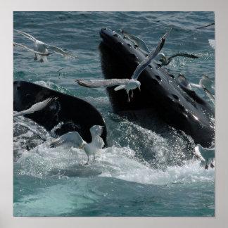 Poster de la ballena jorobada