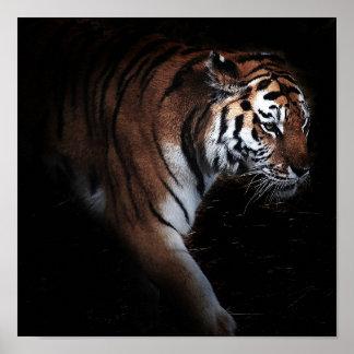 Poster de la búsqueda de los tigres