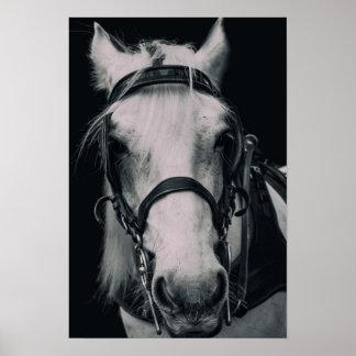 Poster de la cara del caballo blanco