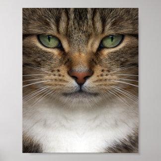 Poster de la cara del gato de Tabby mini