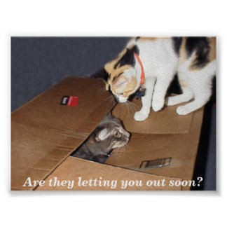 Poster de la cárcel del gato