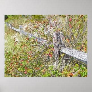 Poster de la cerca y de la hiedra venenosa IBSP NJ Póster