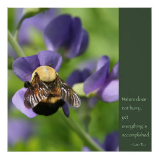 Poster de la cita de Tzu del Lao