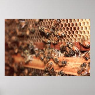 Poster de la colmena de la abeja