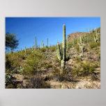 Poster de la escena 03 del desierto de Sonoran