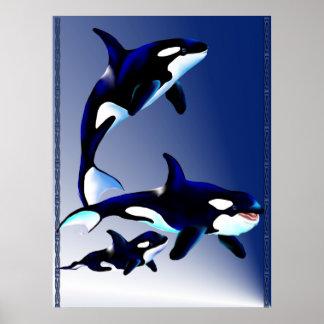 Poster de la familia de la orca póster