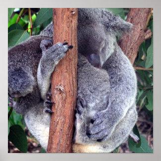 Poster de la familia del oso de koala