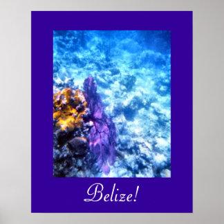 Poster de la fan de mar de Belice