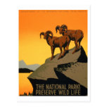 Poster de la fauna del coto del vintage tarjetas postales