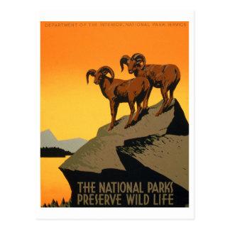 Poster de la fauna del coto del vintage tarjeta postal