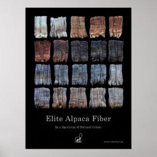 Poster de la fibra de la alpaca