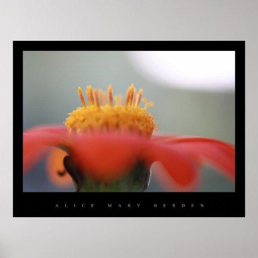 Poster de la flor de la magdalena