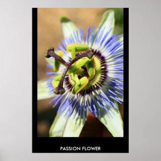 Poster de la flor de la pasión, impresión