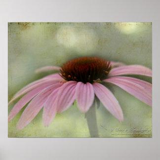 Poster de la flor del cono