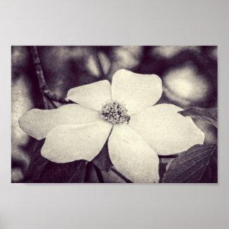 Poster de la flor del Dogwood