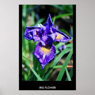 Poster de la flor del iris, impresión