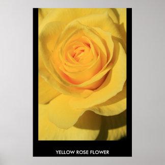 Poster de la flor del rosa amarillo, impresión
