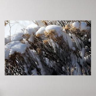 Poster de la flora del invierno
