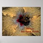 Poster de la Florida de la playa de Juno del hibis