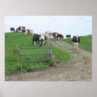 Poster de la foto de las vacas