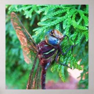 Poster de la fotografía de la libélula