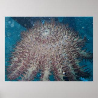 Poster de la fotografía de las estrellas de mar