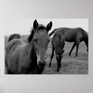 poster de la fotografía de los caballos