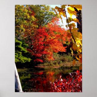 Poster de la fotografía del follaje de otoño del á