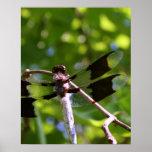 Poster de la fotografía del primer de la libélula
