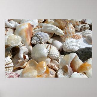 Poster de la fotografía del Seashell de la extra g